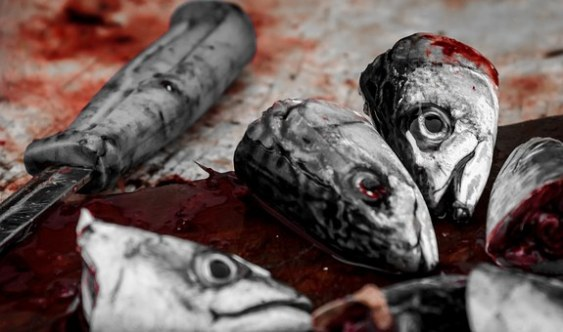 fish heads hare corpse carcass blood death