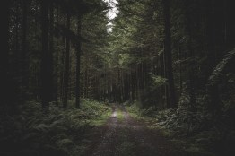 curvy-narrow-muddy-road-dark-forest-surrounded-by-greenery-little-light-coming-from