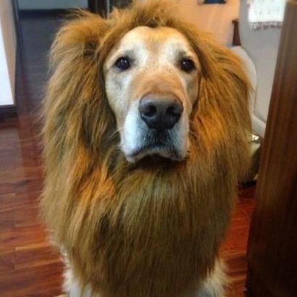 https://animalkinship.com/wp-content/uploads/2018/01/Pets-Acessorios-Factory-Price-Lovely-Large-Dogs-Halloween-Pet-Apparel-Cat-Fancy-Dress-Up-Clothes-Lion.jpg_640x640.jpg
