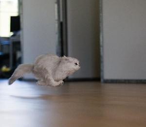 猫を飼っていると、それまで普通にしていた猫が、急に走り回り始めることがあります。これを猫の運動会と呼びます。そこで今回は、「猫の運動会を知っていますか?
