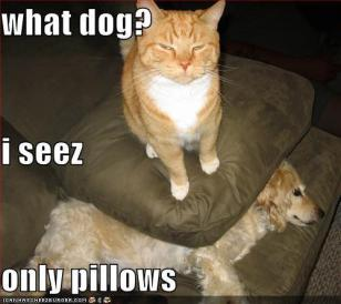 i see no dog