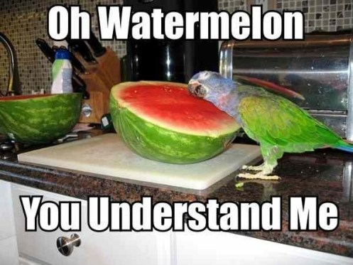 watermelon understands chicken