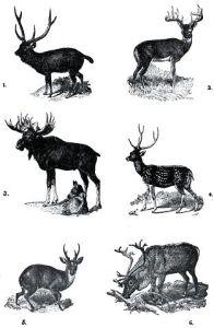 Deer Guide