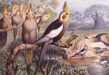 Bird Aviary: A Bird Breeders Essential