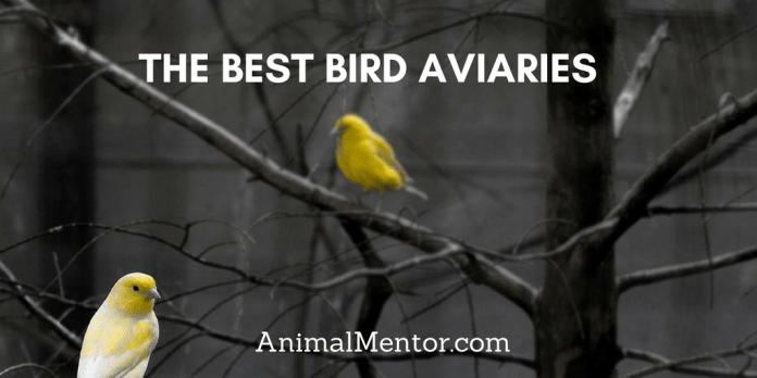 BEST BIRD AVIARY