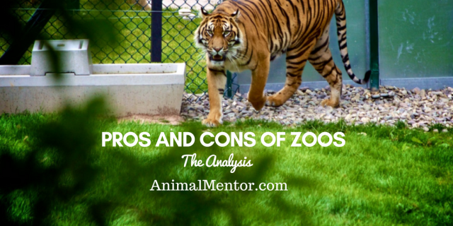 The Pros and Cons of Zoos