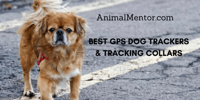 Best GPS Dog Trackers & Tracking Collars