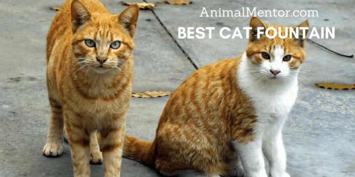 Best Cat Fountain