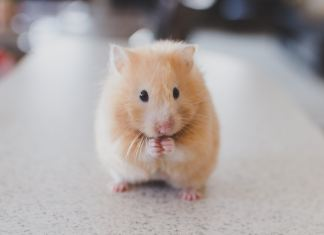 The Best Hamster Cage
