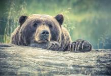 Types of Bears: A Bear Species Guide