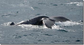 Queue d'une baleine
