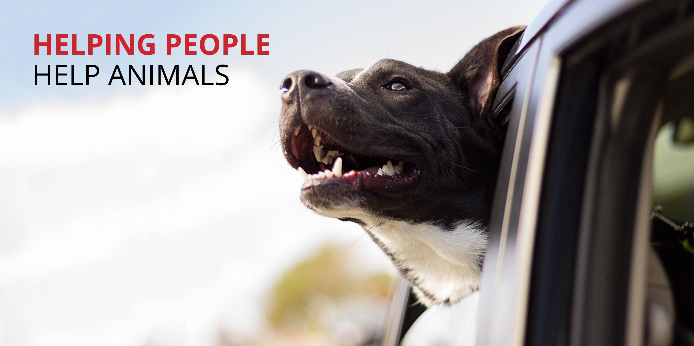 Animal Network Inc