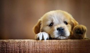adorable-animal-cute-dog-favim-com-2670482