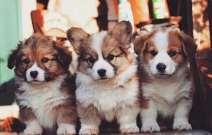 animals-baby-cute-dogs-favim-com-3557376