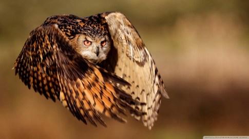 flying-animals_00344823