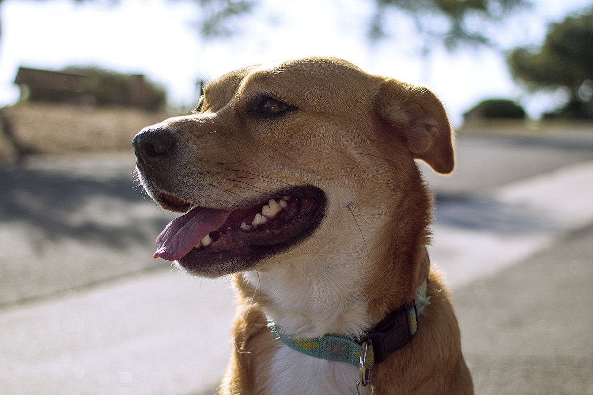 13-dog-gps-trackers-service-costs-compared-13
