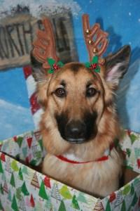 dog-themed-christmas-presents