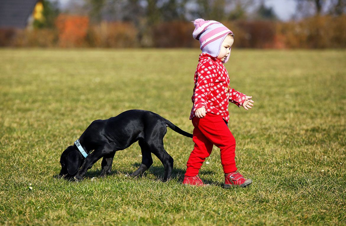 living-with-kids-and-dogs-without-losing-your-mind-by-colleen-pelar-compressor