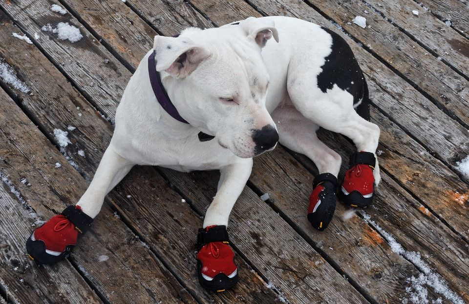 1-ultra-paws-durable-boots-compressor