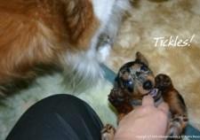 Tickles