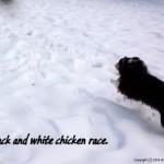 Chicken race.