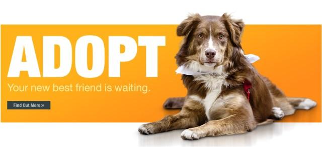 Pets For Adoption – Animal Refuge Center, Inc – Forever Homes