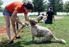 Volunteer Chessie Dahlhauser bathes Scooby on Saturday during the dog wash and animal blessing held at Freeman Lake Park in Elizabethtown by the Animal Refuge Center of Vine Grove. --Jill Pickett