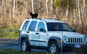 One of the Animal Refuge Center's cats looks over the territory Sunday from a vehicle of a guest attending the Christmas party and open house. --Photo by Neal Cardin