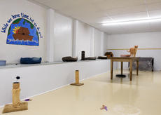Jill Pickett A cat stands on a table Tuesday in the renovated basement of the Animal Refuge Center in Vine Grove. A drop ceiling, new lighting, upgrades to the walls and floor were made possible by a large donation to the shelter. Buy this photo