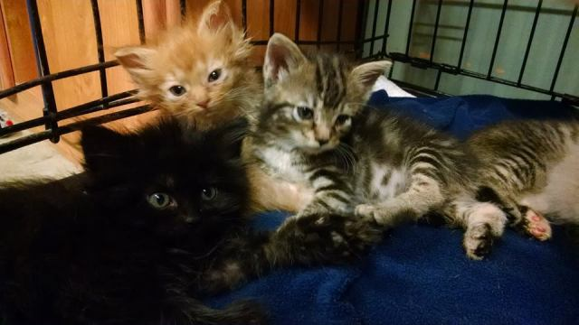 Is Spaying And Neutering Pets A Sin? – Animal Refuge Center, Inc