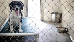 Suit: Animals suffer in Kentucky shelters because state won't enforce its laws