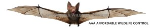Animal Removal Toronto - Bat Removal Services