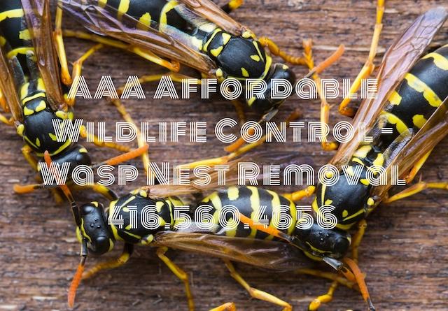 Animal Removal Toronto - Wasp Nest Removal Toronto