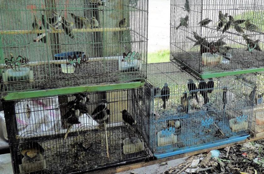 wild bird trade, cruelty to birds, pet bird trade, caged birds, exotic pets