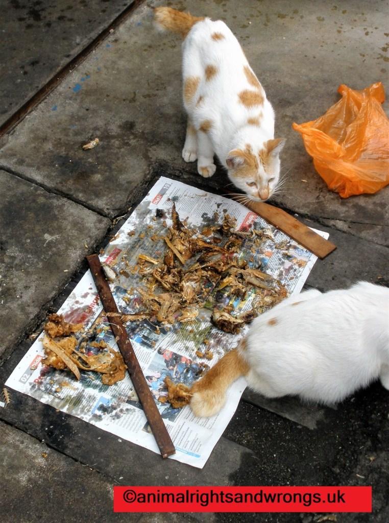 Cat, street, feeding
