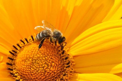 bee, nectar, flower, attitudes