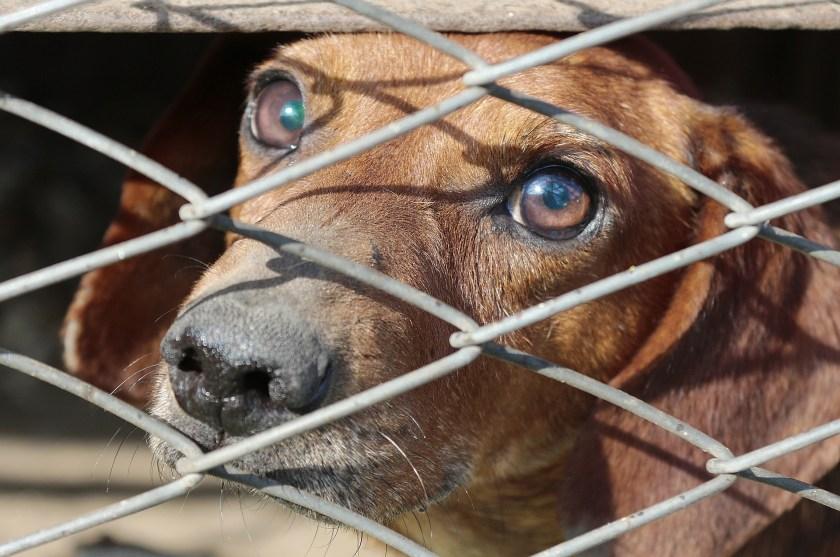 Dog in kennel, sad dog