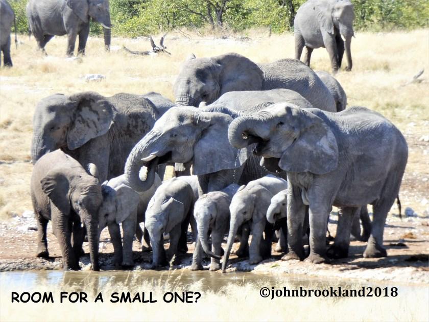 African elephant, baby elephant