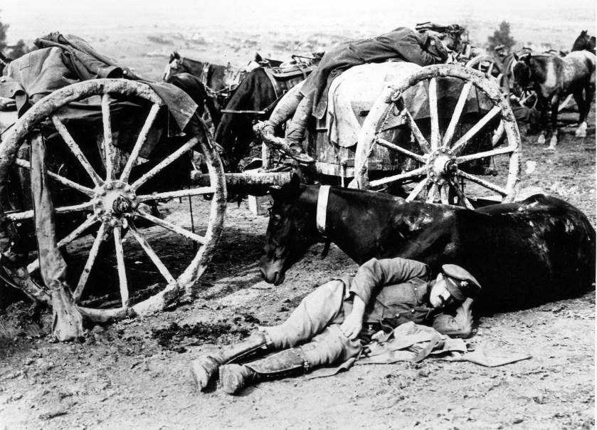 Horses in Great war, war horses