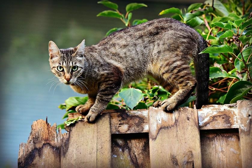 Cats, freedom to roam,