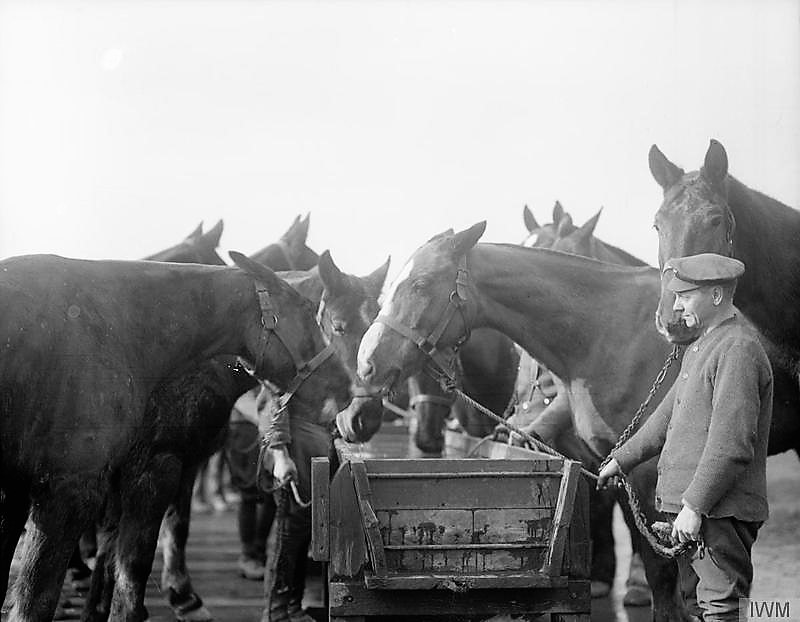 War horse, First world war, horse suffering