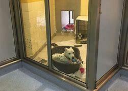 Rescue dog, rescue kennel