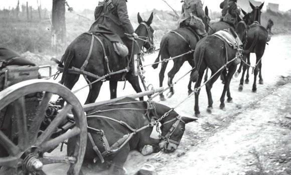 War horse, war horse cruelty
