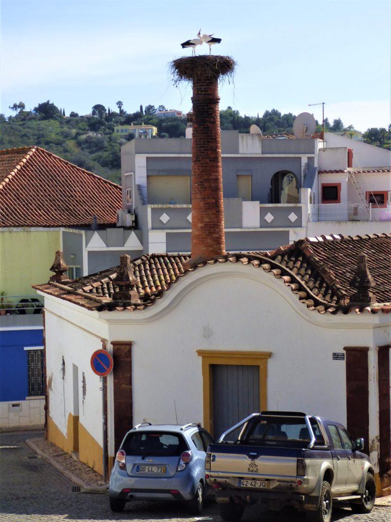 Algarve Storks