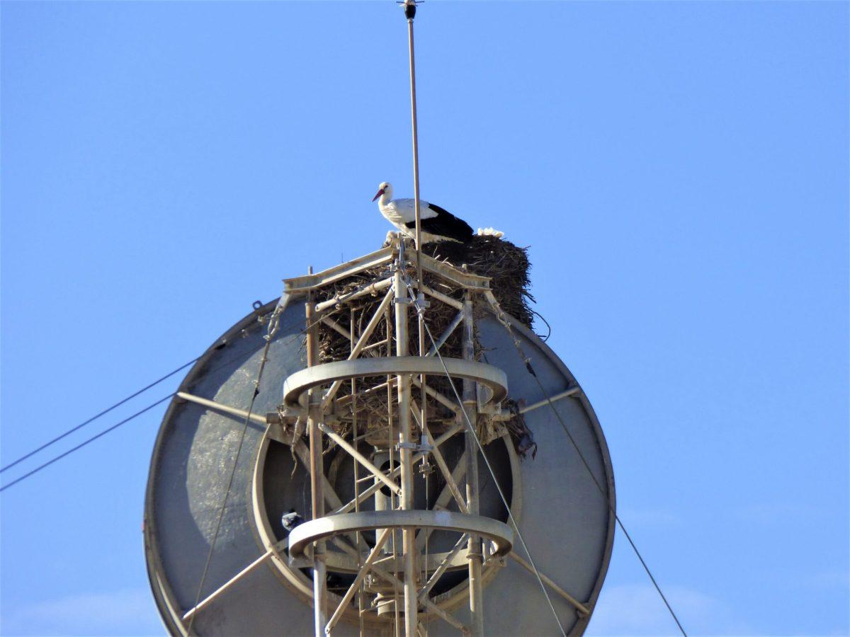 Living in Harmony with Wildlife – Algarve Storks