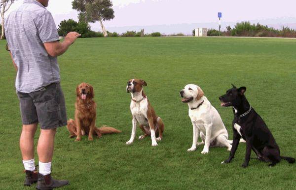 Dog training, dog trainers