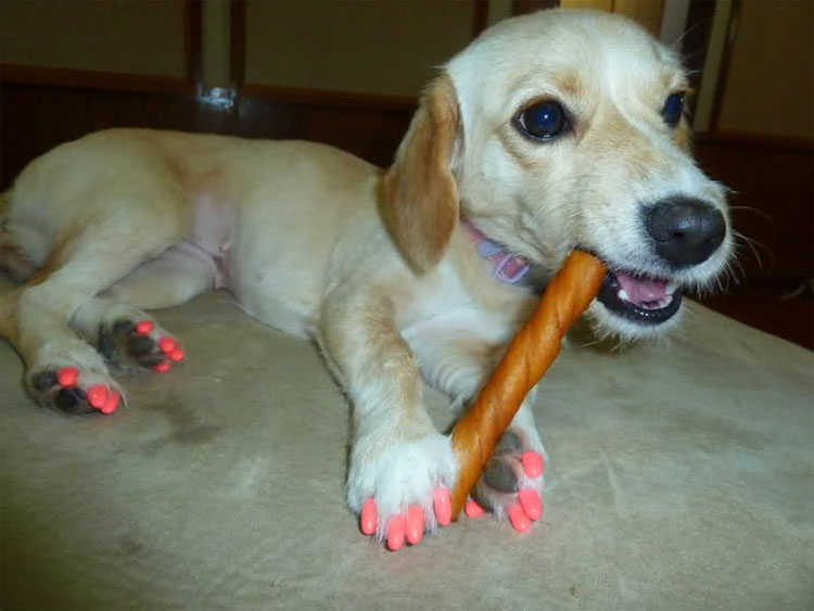 dog painted claws, fad painting dog claws