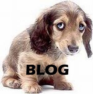 animalrightsandwronksuk logo-blog