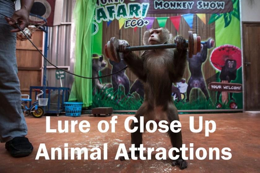 social media, cruel animal attractions