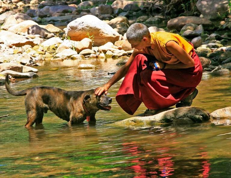 Bhuddism and animal welfare,